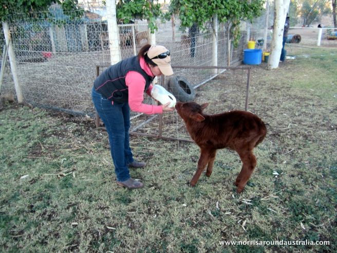 Feeding my baby, Bambi