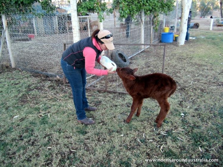 Feeding my baby, Bambi